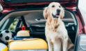 Co warto wozić w samochodzie?